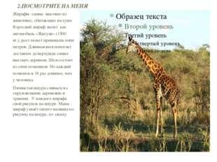 Жирафы- самые высокие из животных, обитающих на суше. Взрослый жираф весит ка