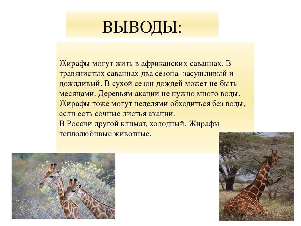 ВЫВОДЫ: Жирафы могут жить в африканских саваннах. В травянистых саваннах два...