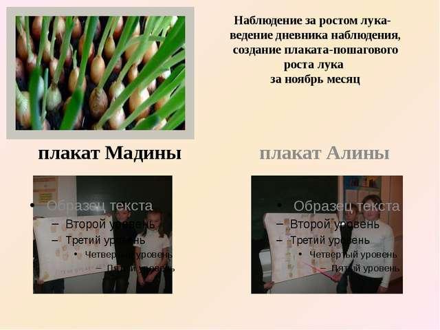 Наблюдение за ростом лука- ведение дневника наблюдения, создание плаката-поша...