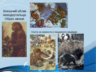 Внешний облик неандертальца. Образ жизни. Охота на мамонта и пещерного медведя.