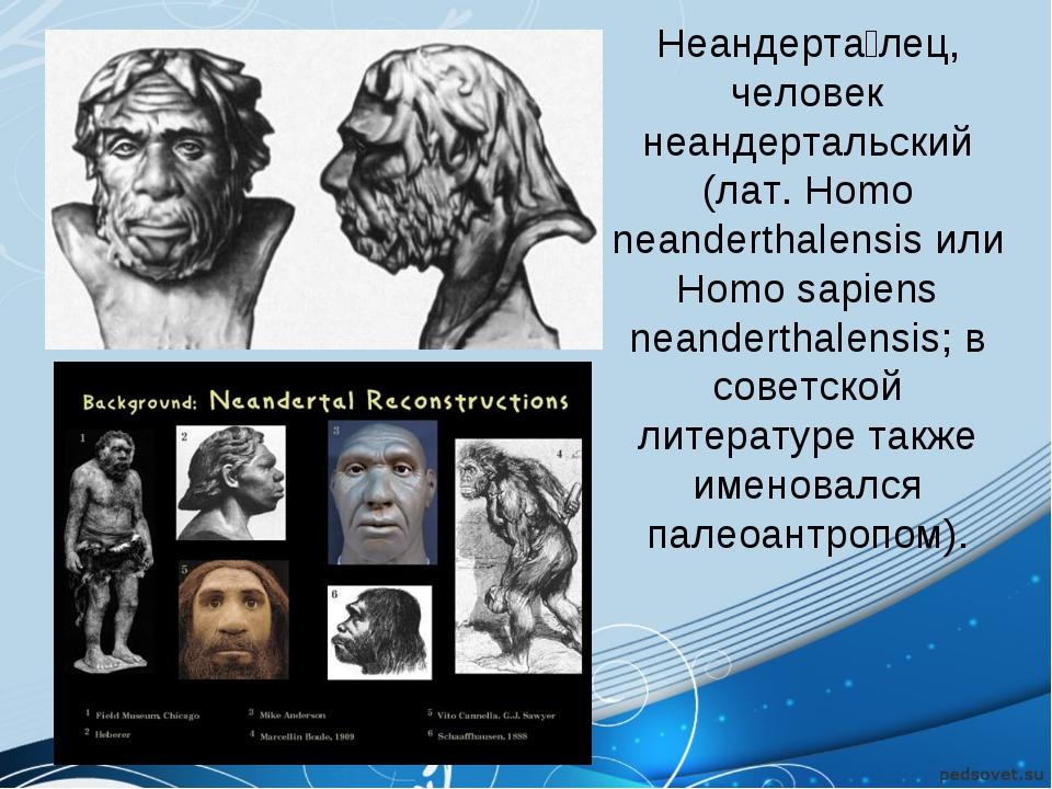 Неандерта́лец, человек неандертальский (лат.Homo neanderthalensis или Homo s...