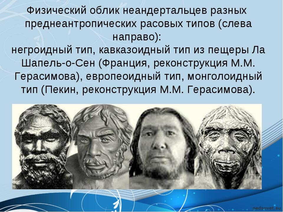 Физический облик неандертальцев разных преднеантропических расовых типов (сле...