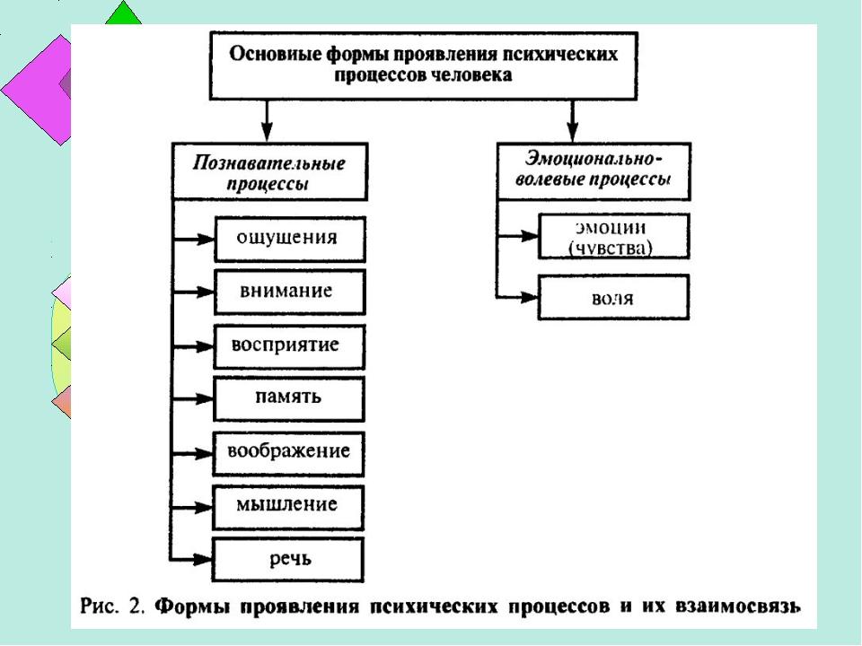 Общая психология. Copiriht Теплова Л.И.