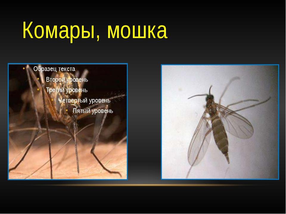 Комары, мошка