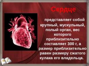 представляет собой крупный, мускульный, полый орган, вес которого приблиз