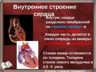 Внутреннее строение сердца Внутри, сердце разделено мембранной на «правое се