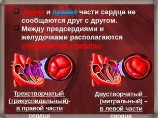 Левая и правая части сердца не сообщаются друг с другом. Между предсердиями