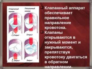 Клапанный аппарат обеспечивает правильное направление кровотока. Клапаны откр