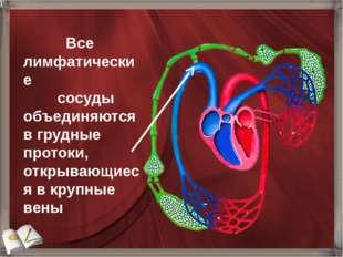 Все лимфатические сосуды объединяются в грудные протоки, открывающиеся в кру