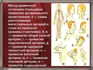 Метод временной остановки (пальцевое прижатие) артериального кровотечения: а