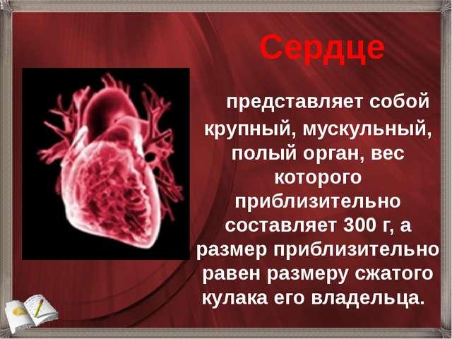 представляет собой крупный, мускульный, полый орган, вес которого приблиз...