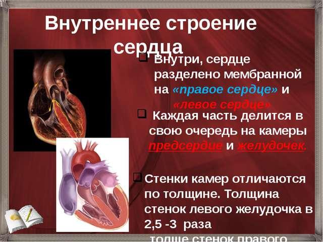 Внутреннее строение сердца Внутри, сердце разделено мембранной на «правое се...