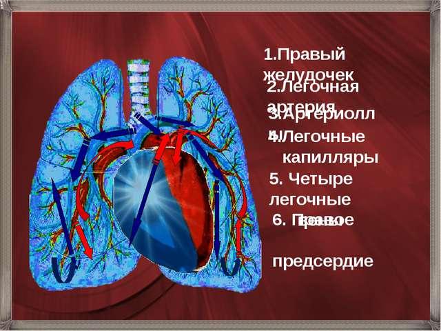 6. Правое предсердие 1.Правый желудочек 2.Легочная артерия 3.Артериоллы 4.Ле...