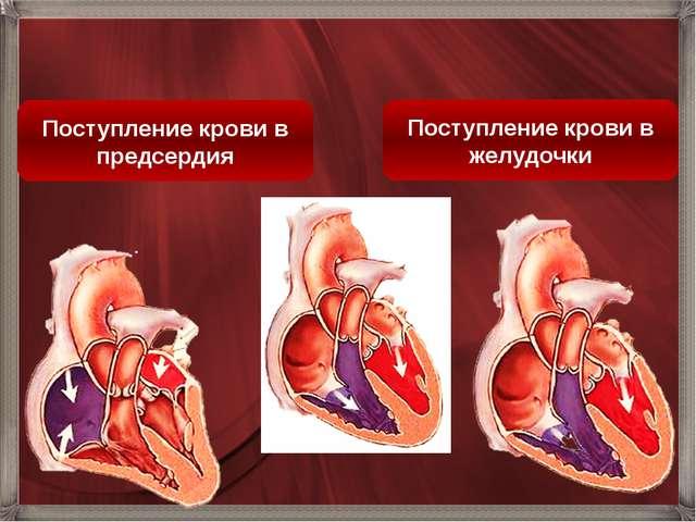 Поступление крови в желудочки Поступление крови в предсердия