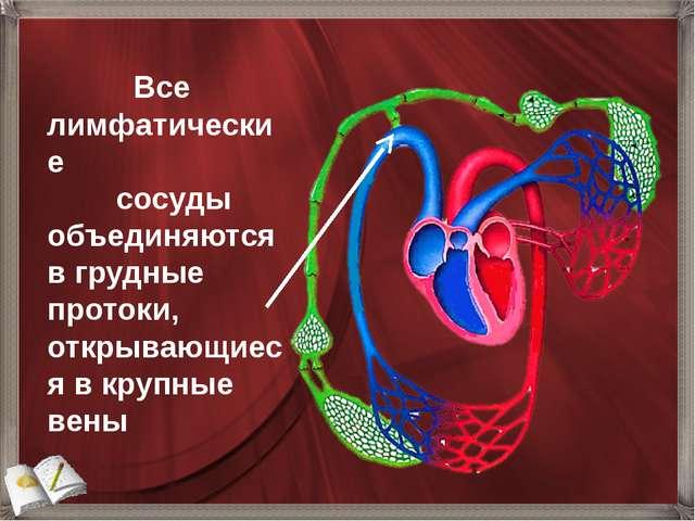 Все лимфатические сосуды объединяются в грудные протоки, открывающиеся в кру...