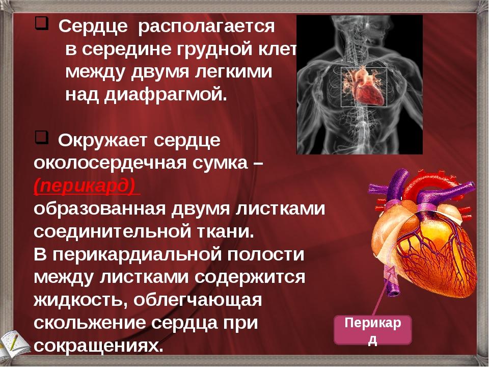 Сердце располагается в середине грудной клетки между двумя легкими над диафр...