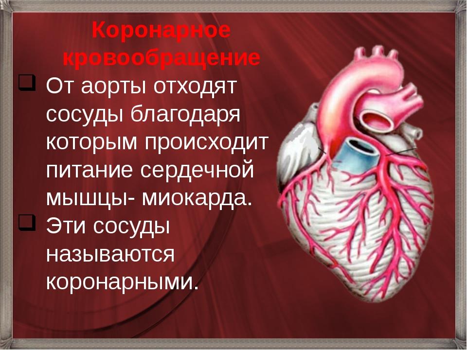 Коронарное кровообращение От аорты отходят сосуды благодаря которым происход...