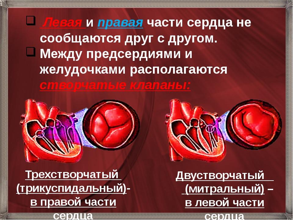 Левая и правая части сердца не сообщаются друг с другом. Между предсердиями...
