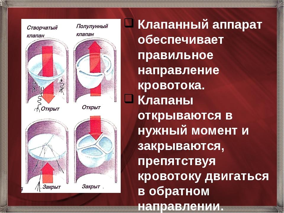 Клапанный аппарат обеспечивает правильное направление кровотока. Клапаны откр...
