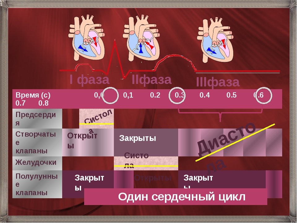 Открыты Диастола Систола Закрыты Закрыты Открыты Систола I фаза IIфаза IIIфаз...