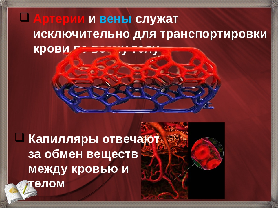 Артерии и вены служат исключительно для транспортировки крови по всему телу К...