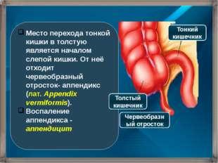 Место перехода тонкой кишки в толстую является началом слепой кишки. От неё о