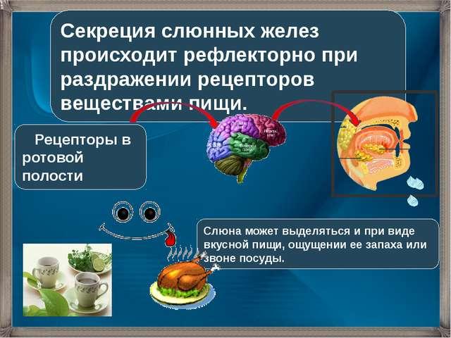 Секреция слюнных желез происходит рефлекторно при раздражении рецепторов веще...