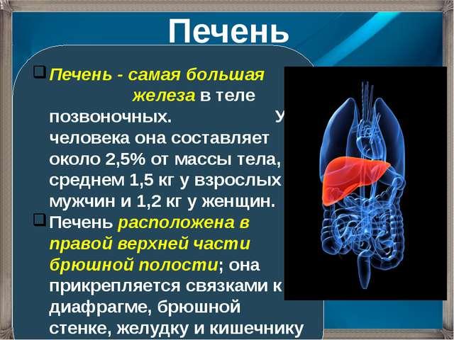 Печень - самая большая железа в теле позвоночных. У человека она составляет о...