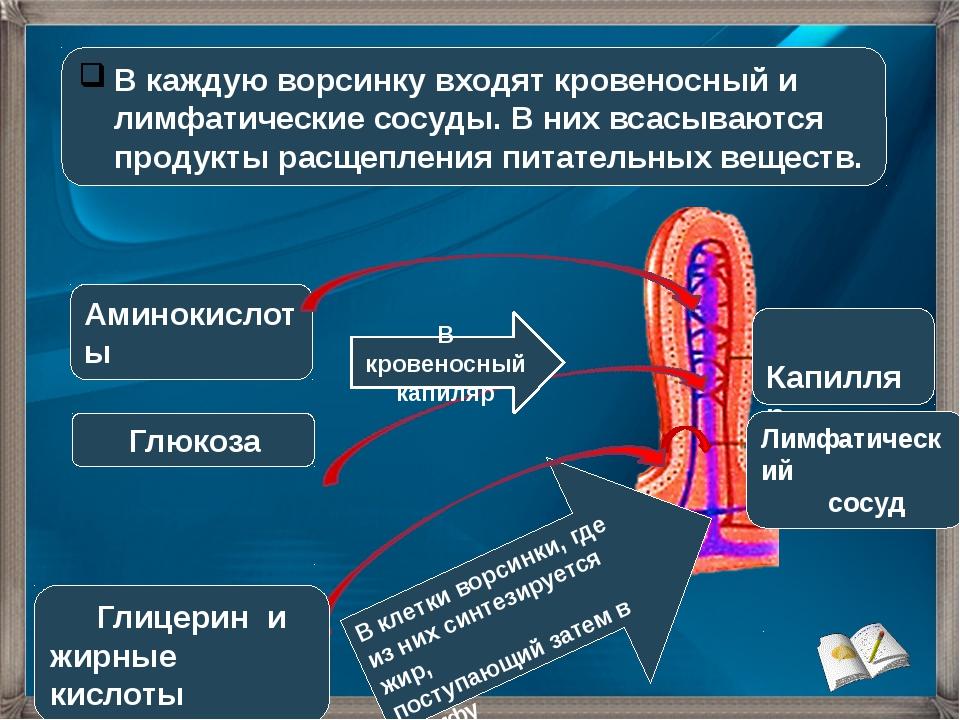 В каждую ворсинку входят кровеносный и лимфатические сосуды. В них всасываютс...