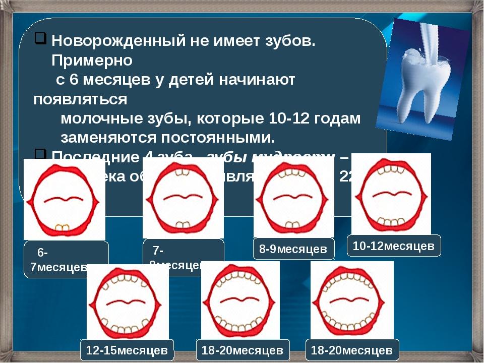 Новорожденный не имеет зубов. Примерно с 6 месяцев у детей начинают появлятьс...