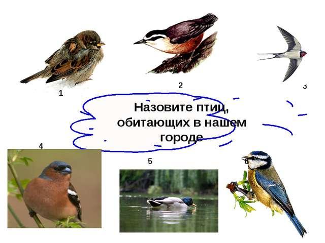 Назовите птиц, обитающих в нашем городе 1 2 3 4 6 5