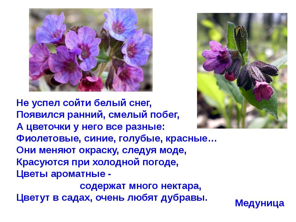 Не успел сойти белый снег, Появился ранний, смелый побег, А цветочки у него в...