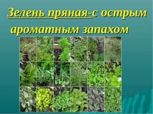 Зелень пряная-с острым ароматным запахом