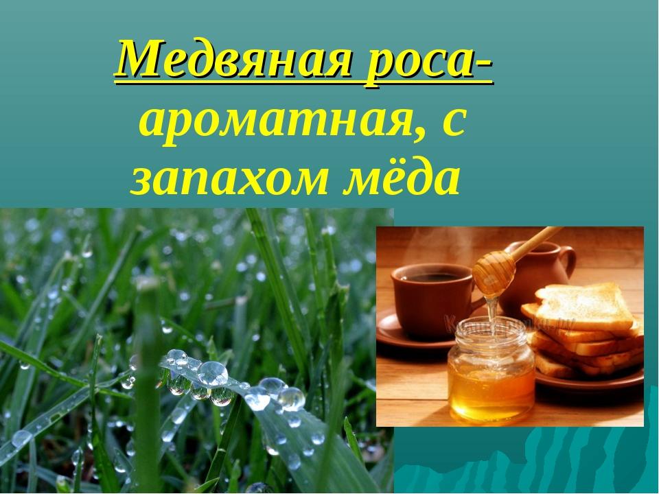 Медвяная роса- ароматная, с запахом мёда