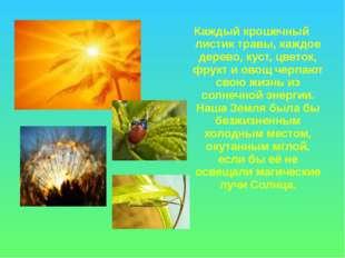 Каждый крошечный листик травы, каждое дерево, куст, цветок, фрукт и овощ черп
