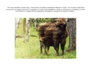Это очень красивые, крупные (до 1 тонны весом) спокойные травоядные животные