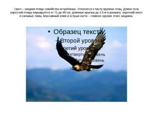 Орел – хищная птица семейства ястребиных. Относится к числу крупных птиц. Дли