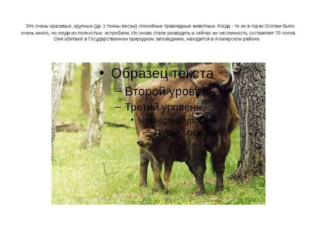 Это очень красивые, крупные (до 1 тонны весом) спокойные травоядные животные...