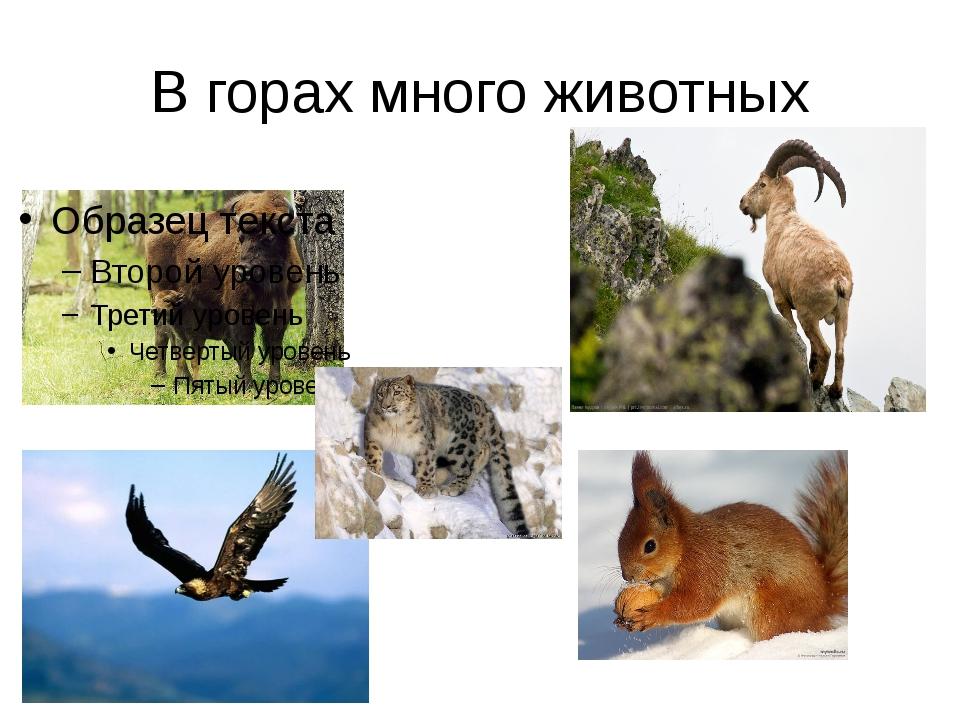 В горах много животных
