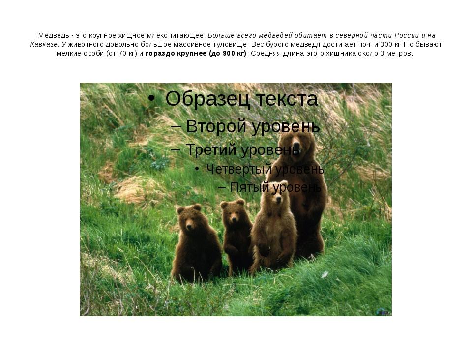 Медведь - это крупное хищное млекопитающее. Больше всего медведей обитает в...