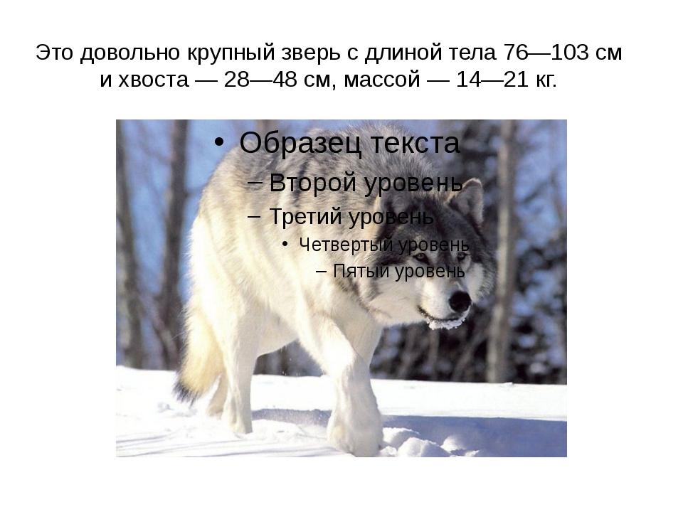 Это довольно крупный зверь с длиной тела 76—103 см и хвоста — 28—48 см, массо...