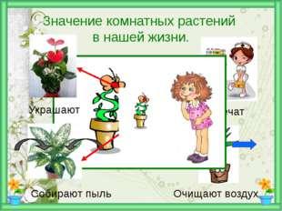 Значение комнатных растений в нашей жизни. Украшают Лечат Собирают пыль Очищ