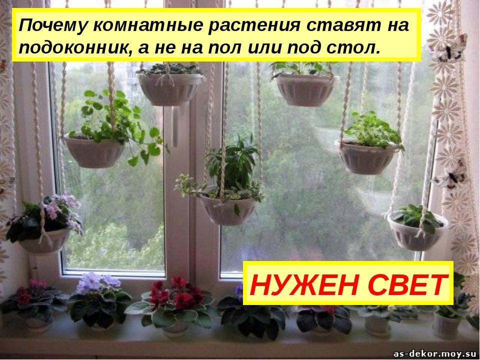 Почему комнатные растения ставят на подоконник, а не на пол или под стол. НУЖ...