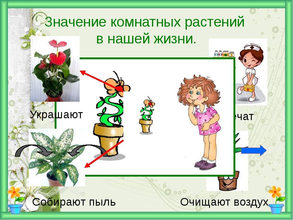 Значение комнатных растений в нашей жизни. Украшают Лечат Собирают пыль Очищ...