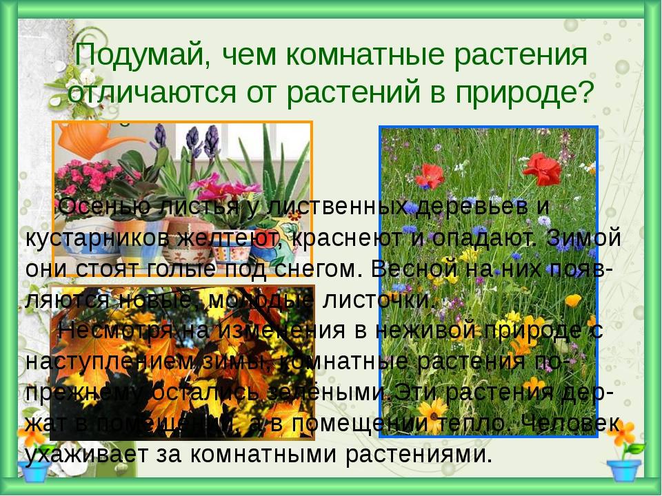 Подумай, чем комнатные растения отличаются от растений в природе? Осенью ли...