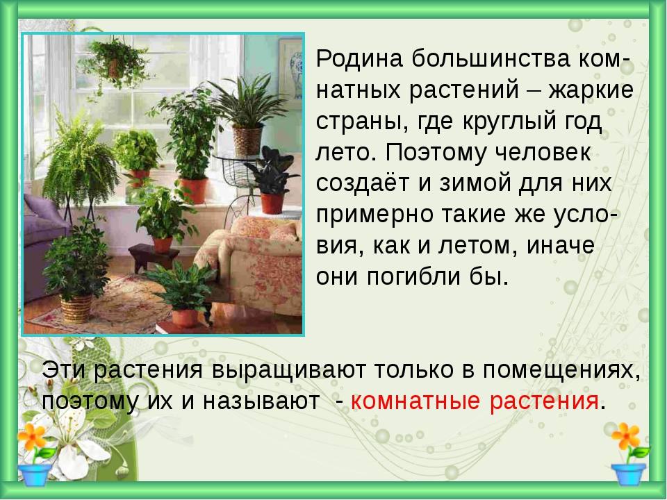 Родина большинства ком- натных растений – жаркие страны, где круглый год лет...