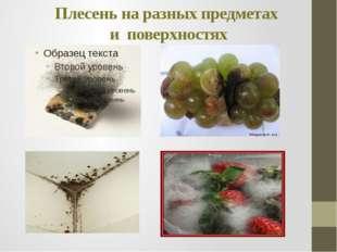 Плесень на разных предметах и поверхностях