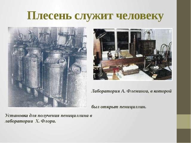 Плесень служит человеку Установка для получения пенициллина в лаборатории Х....