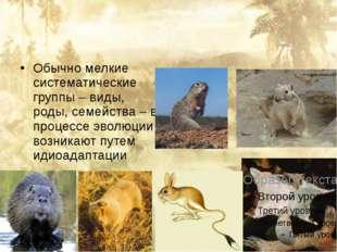 Обычно мелкие систематические группы – виды, роды, семейства – в процессе эв