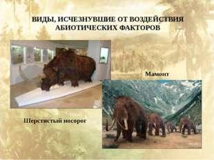 ВИДЫ, ИСЧЕЗНУВШИЕ ОТ ВОЗДЕЙСТВИЯ АБИОТИЧЕСКИХ ФАКТОРОВ Шерстистый носорог Мам